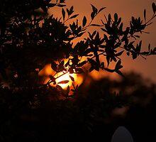 Summer Sunset by Parker Bass