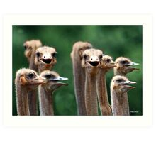 I SAY NO 6! - AT THE OSTRICH RACE - Struthio camelus Art Print