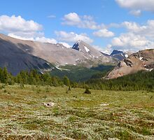Sunshine meadows panorama by zumi