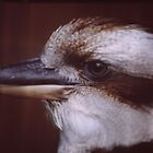 KOOKABURRA by JhaMesPhotos