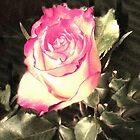 A ROSE by trisha22