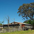 RUSTIC OLD SHEARING SHED by Helen Akerstrom Photography