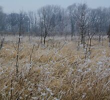 Frosted Angelica along the Teesdale Way, 15-Jan-2012 by Ian Alex Blease