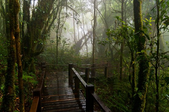 Cloud Forest 2 by Ben Cordia