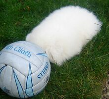 'HEADABALL' - OUR HEADLESS PUPPY by Colleen2012
