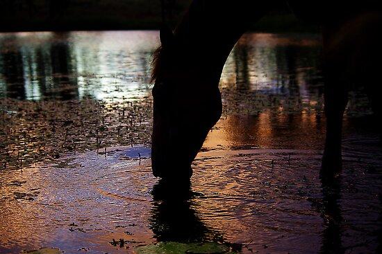 Thirsty Mare by kurrawinya