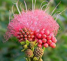 Freaky Flower by rosaliemcm