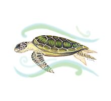Green Turtle (Chelonia mydas) Photographic Print