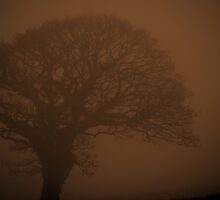 Tree in the Mist by Firefly4029