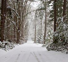 Winter Wonderland by Barb White