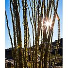 Ocotillo and Sunburst by Tim McGuire