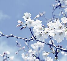 Spring Blossoms by TraceyTilsonArt
