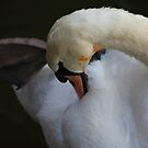 Swan Feathers by John Dalkin