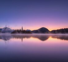 Purple Haze by Conor MacNeill