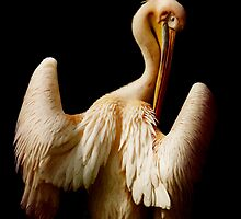 The pelican by AD-DESIGN