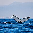 Humpback Whale - Banderas Bay by Roxanne Persson