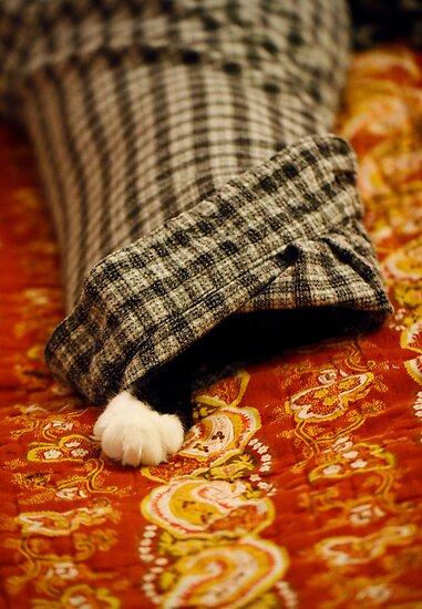 CAT by Lynn Starner