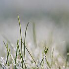 Frosty Grass by Catherine Breslin