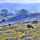 Frosty Morning - HDR by Colin J Williams Photography