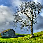 Keld Pasture - HDR by Colin J Williams Photography