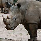 Mr Rhino by Penny Smith