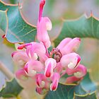 Baby Grevillea by Penny Smith
