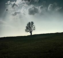 Lonely Tree by David John Atkinson