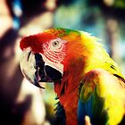 Rescued Macaw by Carolyn Hutchins