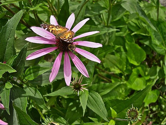 Butterfly and Bumble Bee by Carolyn Clark