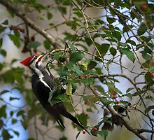 Pileated Woodpecker During South Carolina Winter by Joe Jennelle