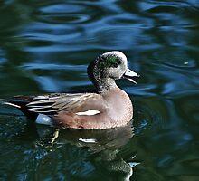 Quacker by levipie