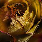 Flower 1148 by Damien  Dust