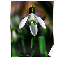 Good Morning Little Snowdrop Poster