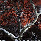 Red Night 2 by Manolya  F.