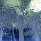 Moonlight Forest by Eric Nagel
