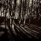 Deep by Richard Pitman