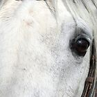 White Horse Eye by muniralawi