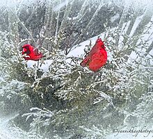 Red Cardinal Cuties in Winter Wonderland by Yannik Hay
