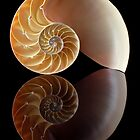 nautilus by Jim  Hughes