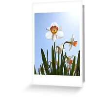 Orange and white daffodils Greeting Card