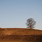 A lonely tree by Ulla Vaereth