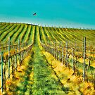 Flag and Vineyard by Dale Stillman