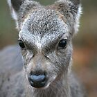 Deer Portrait by Christopher Lloyd