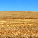 Harvest Pano by Bill  Robinson