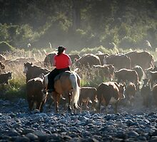 dusty river crossing  south westland  nz by rina  thompson