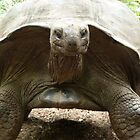 The 200 Year Old Giant Tortoise, Kenya, Africa by Anita  Fletcher