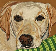 Labrador Retriever - Yellow by Anita Meistrell Putman