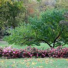 Autumn Park Scenery by Carolyn  Fletcher