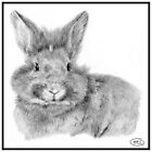 Bunny by Helen Lloyd