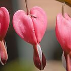Hearts O' Plenty Dark Pink by KSKphotography